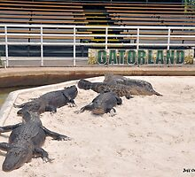 Welcome To Gatorland by Jeff Ore