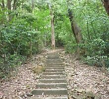 steep windy granite steps into lush enchanting jungle by Joseph Green