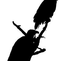 eagle pair silhouette by dedmanshootn