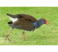 Angry Bird Photographic Print