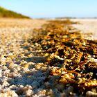 Locust Graveyard — Washed on an Empty Beach by Brad Lynch