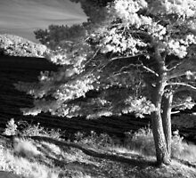 Infrared 1 by BKSPicture
