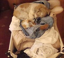 """""""Oppps...guess I can't do the laundry"""" !!! by Barbara922"""