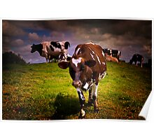 Hill Cows Poster