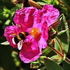 Busy Bumble Bee by TonyGeary