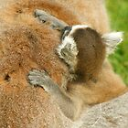 cuddles by tallulahminky