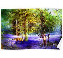 Bluebell Fox Poster