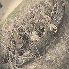 Dead Flowers by Ashli Amabile