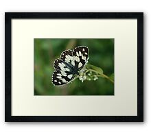 Marbled White Framed Print