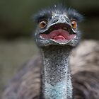 Eddie the Emu by Dean Cunningham