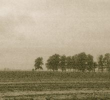 Trees along a farm field by Mitch Labuda