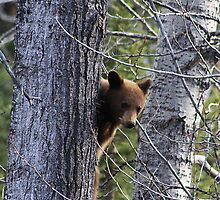 Do You See Me? by Alyce Taylor