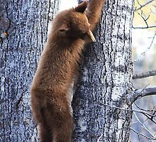 Tree Climber by Alyce Taylor
