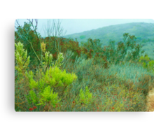 Brush and Plants on a Rainy Day Canvas Print