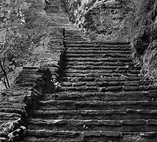 The Steps Never End by Gene Walls