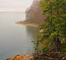 Coastline in Fog, Blue Hill Peninsula, Maine by fauselr