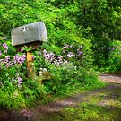 Box 75 by Lori Deiter