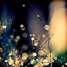 When Fairies  dance. by Beata  Czyzowska Young