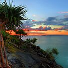 Noosa Grand Pandanus by Adam Gormley