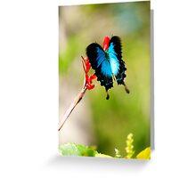 Gotchya - Ulysses Butterfly Greeting Card