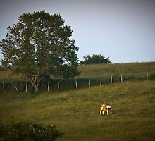 The Lonely Cow by Scott Ruhs