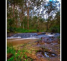 Flowing by the Eucalypts by Stephen Bird