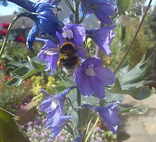 bee on delphinium by katiebm