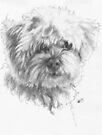 Maltipoo by BarbBarcikKeith