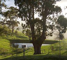 landscapes #203, shine by stickelsimages