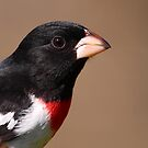 Rose-breasted Grosbeak Portrait by naturalnomad