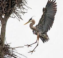 Cleared For Landing by Bill Maynard