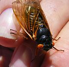 Cicada ~ A Very Annoying Insect by barnsis