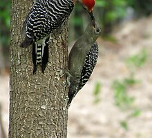 Mama & Baby Woodpecker by Caren