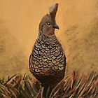 Scaled Quail  by Rebecca Lee Means