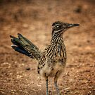 Roadrunner  by Saija  Lehtonen