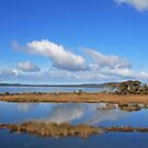 Oyster Harbour Wetlands by Robert Abraham