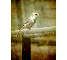 A feathered friend © Photographic Print