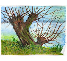 2 WILLOW TREES Poster