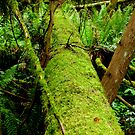 Moss Covered Trees Lying On The Forest Floor    by Elaine Bawden