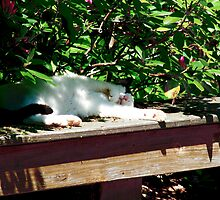 Cliffords Afternoon Siesta  by Marcia Rubin