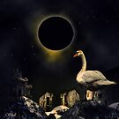 The Wisdom of the Swan by shall