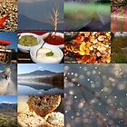 End of Autumn photo sampler by Cheryl Ridge