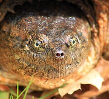 Snapping Turtle by mark5032001