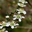 Pretty Little Flowers by Jason Dymock Photography