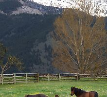 Saddle Peak Above Ponies by Kay Kempton Raade