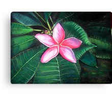 Frangipani Flower Canvas Print