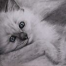 Ragdoll Kitten by Felicity Deverell