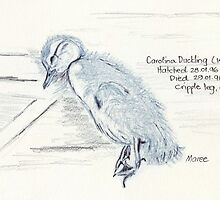 Dead Duckling sketch by Maree  Clarkson