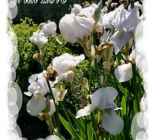 White Irises by Shoshonan