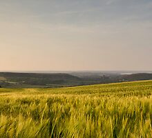 Field of wheat by Chris Seagal